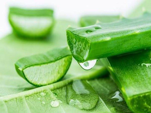 Phần gel nha đam giàu dưỡng chất giúp làm rậm lông mày